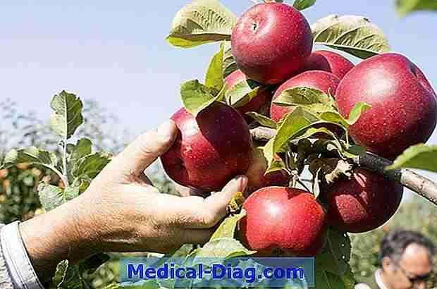 Magnesium: Gesundheitliche Vorteile, Fakten, Forschung (Medical-Diag ...