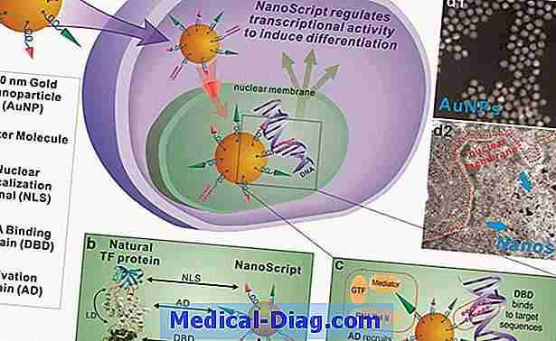 Viral protein mimic holder immunsystemet stille