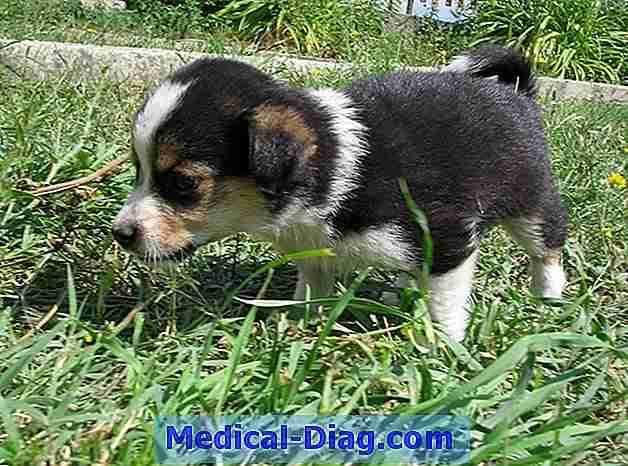 borstkanker bij honden