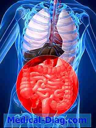 Immunsystem Beeinflusst Die Evolution Von Darmbakterien, Studie ...